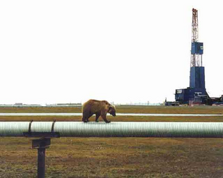 Another Bear on a Pipeline